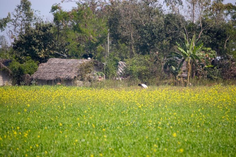 basetharuhouse