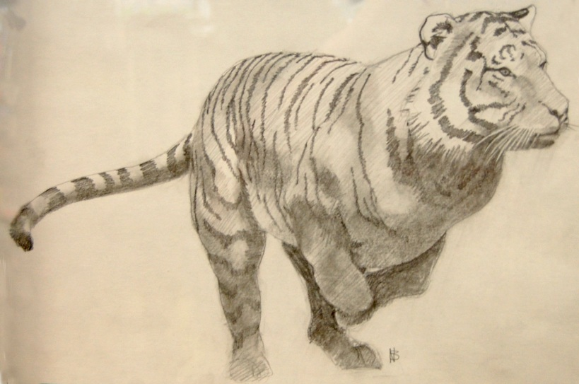 TigerNorrisBrown2